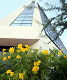 Um prédio de escritórios com flores amarelas Imagem de Stock