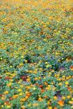 Um prado bonito dos wildflowers Foto de Stock Royalty Free