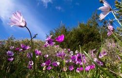 Um prado completamente das flores imagens de stock royalty free