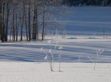 Um prado congelado bonito no dia de inverno ensolarado imagem de stock royalty free