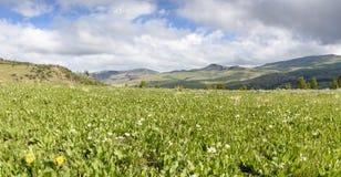Um prado das orelhas brancas do ` s da mula, Idaho do sudoeste, Oregon do sudeste imagens de stock