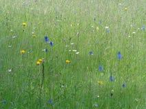 Um prado de feno da montanha com flores Foto de Stock Royalty Free