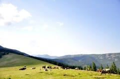 Um prado enorme nas montanhas fotografia de stock royalty free