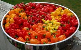 Um prato de pimentas de pimentão Fotos de Stock Royalty Free