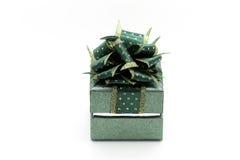 Um presente bonito Imagens de Stock Royalty Free