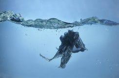 Um problema da poluição - saco de plástico no oceano foto de stock royalty free