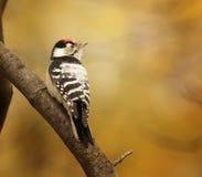 Um pássaro pequeno em um ramo de árvore Foto de Stock Royalty Free