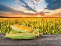 Um punhado do milho amarelo maduro na placa de madeira contra o campo de milho Fotos de Stock Royalty Free