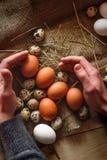 Um punhado dos ovos nas mãos Fotografia de Stock Royalty Free