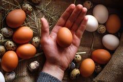 Um punhado dos ovos nas mãos Imagens de Stock Royalty Free