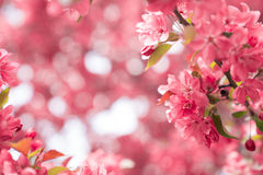 Um quadro das flores Fotos de Stock Royalty Free