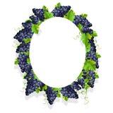Um quadro realístico com uvas pretas Fotografia de Stock Royalty Free