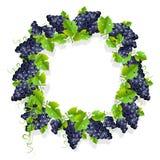 Um quadro realístico com uvas pretas Imagem de Stock