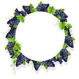 Um quadro realístico com uvas pretas Fotos de Stock