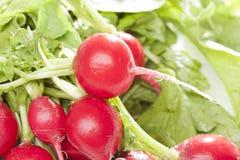Um radish vermelho fresco Fotografia de Stock