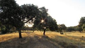 Um raio de árvores da cruz do sol, arboles do cruzando de rayo de solenoide Fotografia de Stock