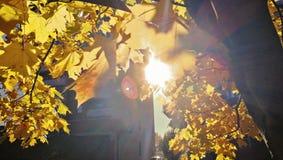 Um raio de luz do sol nas folhas douradas imagens de stock royalty free