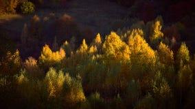Um raio do sol acaricia um grupo das árvores fotografia de stock royalty free