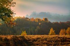 Um raio do sol acaricia um grupo das árvores fotos de stock