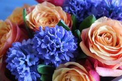 Um ramalhete bonito das rosas e dos jacintos apelar? a cada mulher Sua fragr?ncia real conquistar? o cada foto de stock