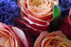 Um ramalhete bonito das rosas e dos jacintos apelar? a cada mulher Sua fragr?ncia real conquistar? o cada imagens de stock