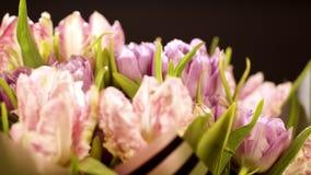 Um ramalhete bonito das tulipas cor-de-rosa encaracolado em um fundo preto As flores fecham-se acima Macro Tiro macro Luz - rosa filme