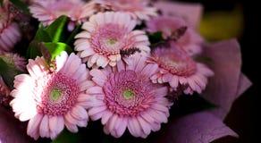 Um ramalhete bonito de herbers cor-de-rosa imagens de stock royalty free