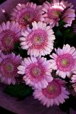 Um ramalhete bonito de herbers cor-de-rosa fotos de stock