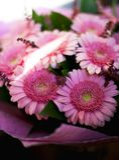 Um ramalhete bonito de herbers cor-de-rosa foto de stock