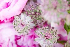 Um ramalhete da composição de flores da cebola do allium Imagem de Stock Royalty Free