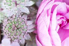 Um ramalhete da composição de flores da cebola do allium e da peônia cor-de-rosa Imagem de Stock Royalty Free