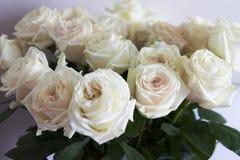 Um ramalhete das rosas brancas de creme Um ramalhete das rosas não está no foco Fotografia de Stock Royalty Free