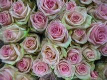 Um ramalhete de bonito fresco empalidece - rosas cor-de-rosa em um vaso foto de stock royalty free