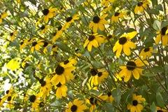 Um ramalhete de flores amarelas Imagens de Stock