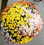 Um ramalhete de flores bonitas, flores pequenas amarelas, flores pequenas brancas, flores bonitas em um canteiro de flores, uma f Foto de Stock