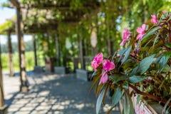 Um ramalhete de flores cor-de-rosa fotografia de stock