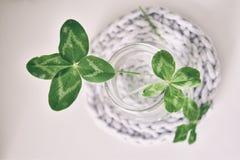 Um ramalhete de l trevos de quatro folhas do campo em um vaso pequeno em um ligh Fotos de Stock