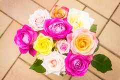 Um ramalhete de rosas coloridas macias fotografia de stock royalty free