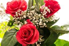 Um ramalhete de rosas vermelhas Foto de Stock