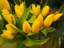 Um ramalhete de tulipas amarelas fotografia de stock