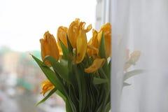 Um ramalhete de tulipas amarelas em um vaso na soleira Um presente t Imagem de Stock