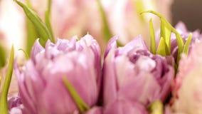 Um ramalhete de tulipas cor-de-rosa em um fundo preto Um ramalhete bonito das tulipas cor-de-rosa encaracolado em um fundo preto video estoque