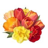 Um ramalhete de tulipas e do narciso amarelo brilhantes da mola floresce Imagens de Stock Royalty Free