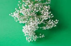 Um ramalhete do gypsophila branco em um fundo verde imagens de stock royalty free