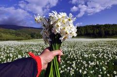 Um ramalhete do narciso em maio imagens de stock royalty free