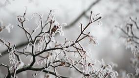Um ramo congelado de uma árvore no gelo filme