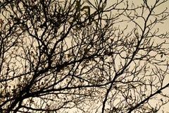 Um ramo da silhueta Imagens de Stock Royalty Free
