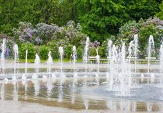 Um ramo das sirenes em uma árvore em um jardim, parque Fotos de Stock Royalty Free