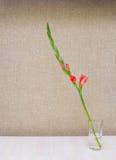 Um ramo de um tipo de flor alaranjado de florescência Fotos de Stock Royalty Free