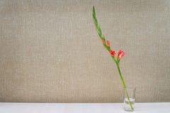 Um ramo de um tipo de flor alaranjado de florescência em um vidro da água Foto de Stock Royalty Free